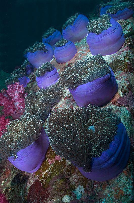 images de fonds marins