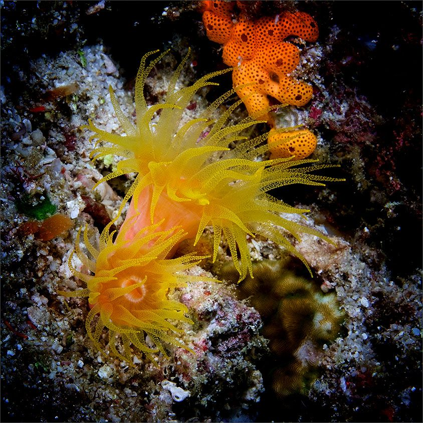 Image du Blog aigleange.centerblog.net